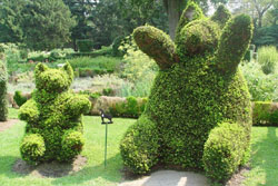 Teddy bear topiaries